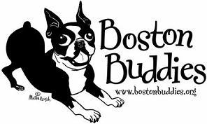 featured boston terrier rescue boston buddies southern california
