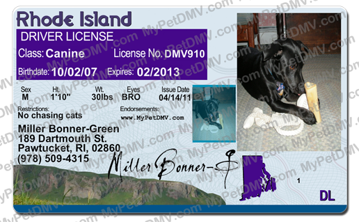 Rescued is my favorite breed pet search page rhode island get a state id card for your pet click here publicscrutiny Choice Image