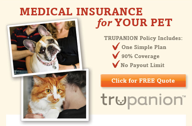 TRUPANION - Medical Insurance for Your Pet. Click Here to Get a FREE Quote.